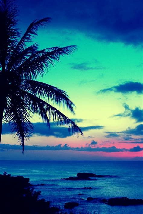 tropical sunset iphone wallpapers pinterest