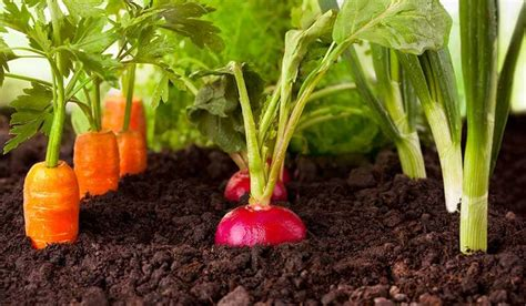 pictures of vegetable plants how to grow tasty homegrown veggies