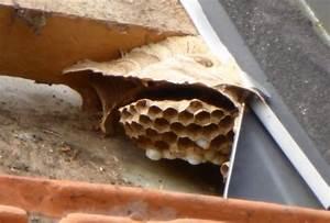 Essaim De Frelon : nid d 39 abeilles sous toiture ~ Melissatoandfro.com Idées de Décoration