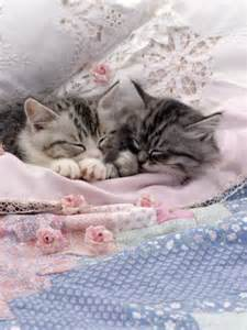 why does my cat sleep on my bed lovely kittens babies pets and animals photo 17466937