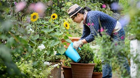 gardening picture gardening horticulture training courses qualifications rhs gardening