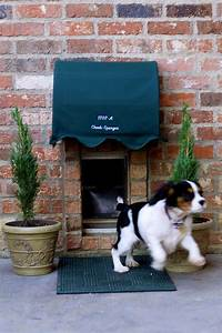 Pet friendly pets entrance and dogs for Dog house with a door