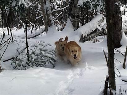 Animals Funny Wallpapers Desktop Animal Snow Doggie
