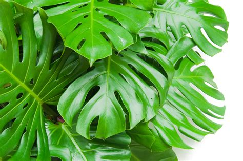 Philodendron Arten Bilder by 9 Low Maintenance Plants You Can T Kill Get Healthy U