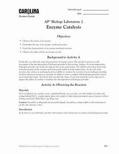 Ap Lab 2 Enzyme Catalysis Manual Pdf