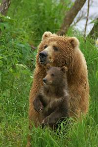 Kodiak Bear Center Lodge Tour  Kodiak Wildlife Refuge Alaska
