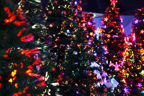lit christmas trees  stock photo public domain pictures