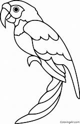 Parrot Coloring Pages sketch template
