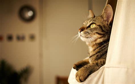 walpaper kitty hd desktop wallpapers  hd