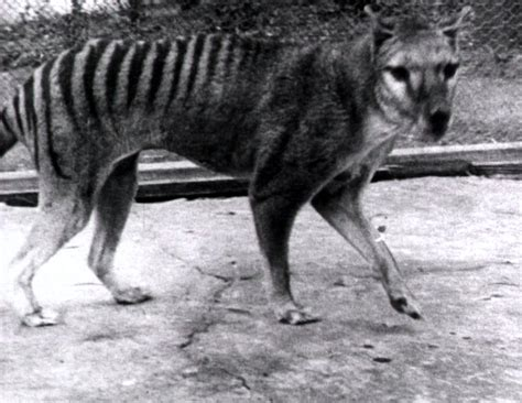 Iconic animals that vanished within recent history