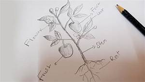 How To Draw A Plant