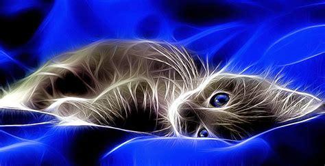 Abstract Animal Wallpaper - cats blue creative animal wallpaper wallpaper