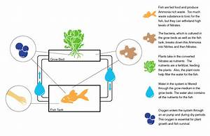 Aquaponics  U2013 Efishient Food Production In Palestine