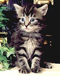 wie erziehe ich einen menschen teil  katzecat kat