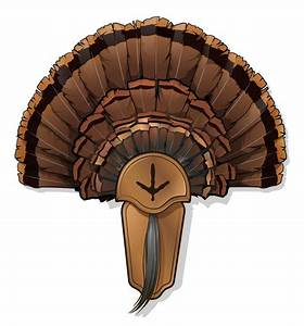 5 diy turkey taxidermy projects With turkey fan mount template