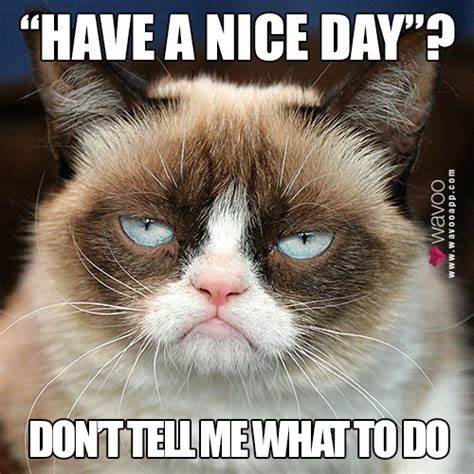 Have A Great Day Meme - wavoo on twitter quot have a nice day meme lol grumpycat http t co pm5ntf4bbe quot