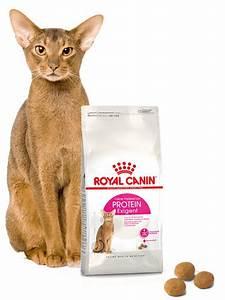 Royal Canin Exigent : royal canin exigent protein preference karma sucha dla kot w doros ych wybrednych kieruj cych ~ Eleganceandgraceweddings.com Haus und Dekorationen