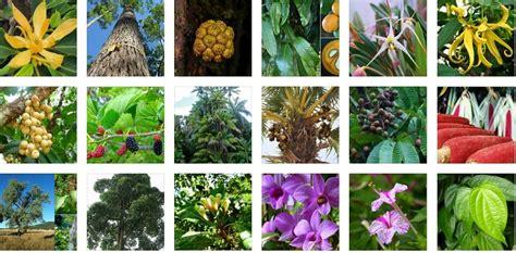 melestarikan hewan  tumbuhan langka  belajar
