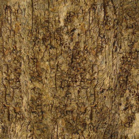 tree bark texture 187 bark 001 kirk dunne blog