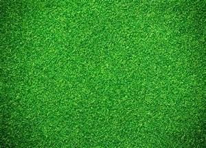 Green grass background Photo | Premium Download
