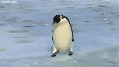Penguin Penguins Homes Freaky Facts Ice Another