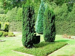 Immergrüne Pflanzen Winterhart : cotoneaster als pflegeleichte grabbepflanzung ~ A.2002-acura-tl-radio.info Haus und Dekorationen