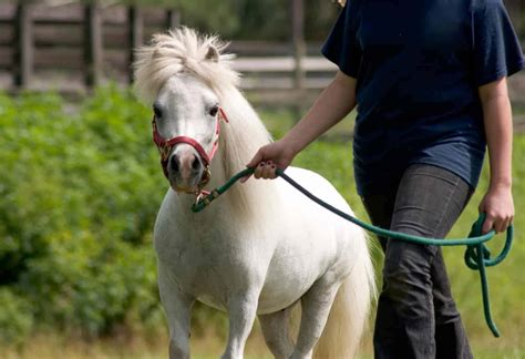 horse miniature horses anesthetizing mules leading anesthesia thehorse such general under procedures routine surgical veterinarians equids putting comes process follow