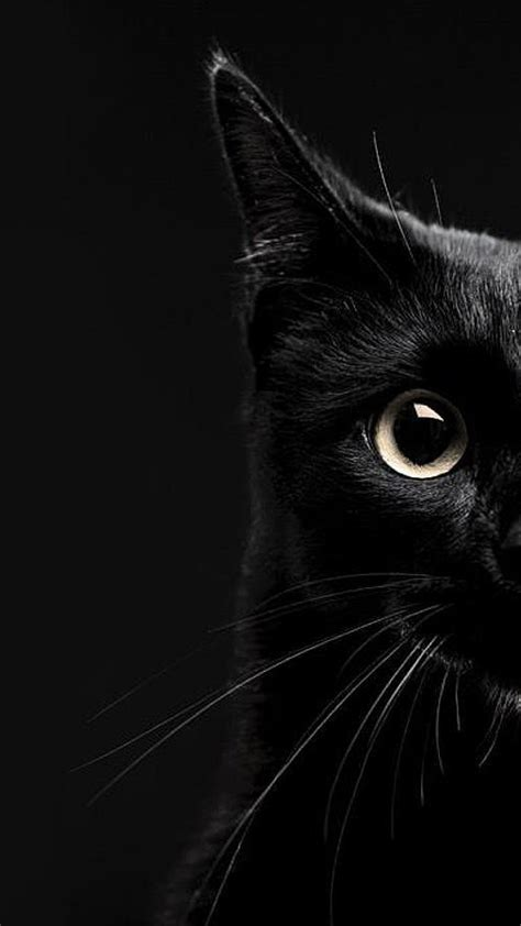 Hd Black Photo by Wallpaper Black Cat The Best 69 Images In 2018
