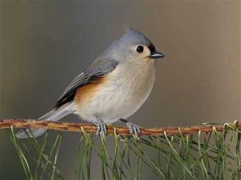 image gallery ohio birds identification