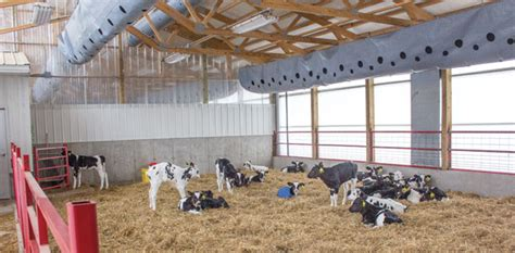 Check Out My ... New Calf Barn And Automated Feeding