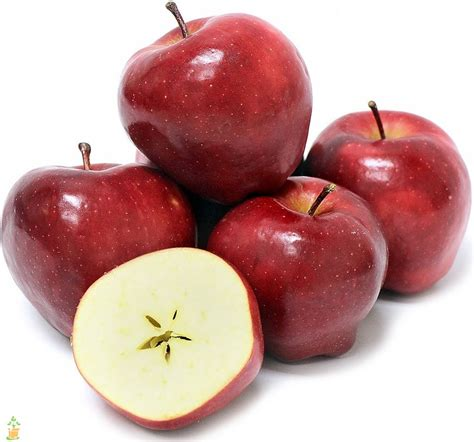 Red Delicious Apple Trees For Sale  The Planting Tree