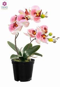 Künstliche Orchideen Im Topf : k nstliche orchidee im topf rosa 28 cm ~ Watch28wear.com Haus und Dekorationen