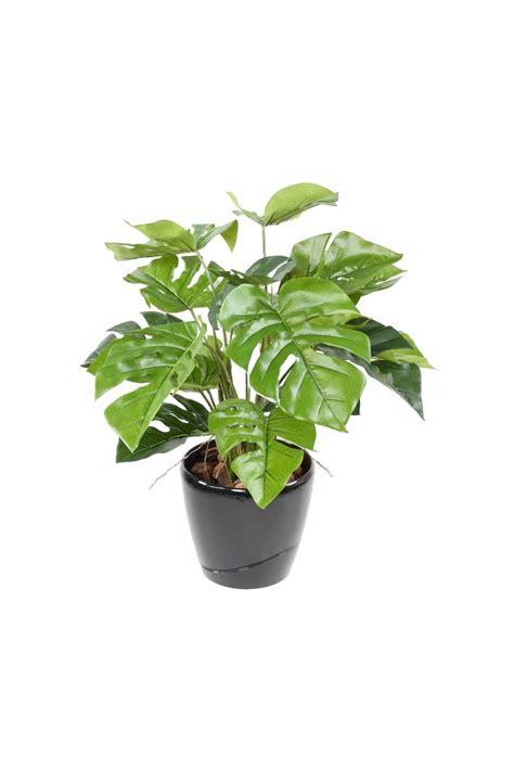 Artificial Potted Philo Plant 60cm - Replica Plants