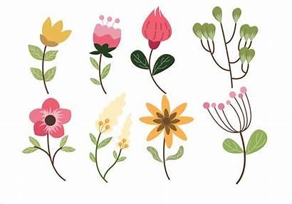 Vector Flower Clipart Leaf Illustration Vectors Camellia
