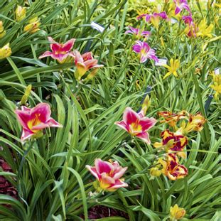 prissys garden arthurs