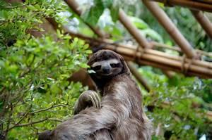 The Rarest Animals On Earth