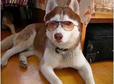 搞笑狗狗图片 最高和最矮的对话3 爱宠网
