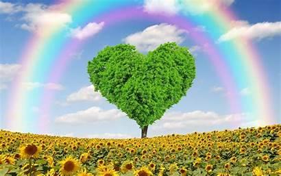 Environmental Wallpapers Sonnenblumen Hintergrundbilder Hintergrundbild