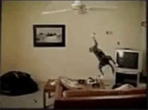 Cat Swinging From Ceiling Fan cat swinging from ceiling fan youtube