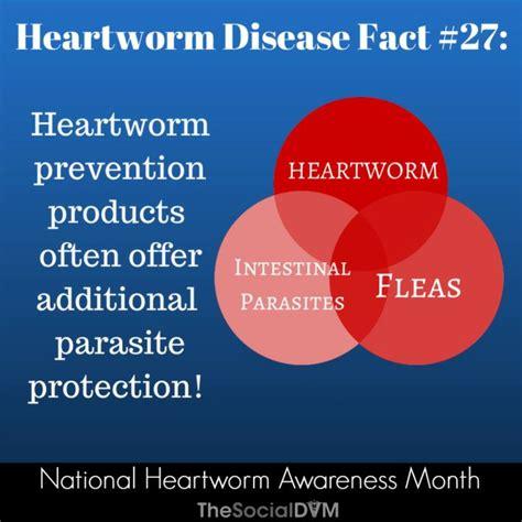heartworm treatment 36 best heartworm awareness images on pinterest