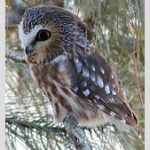 Symbolic Owl Me...