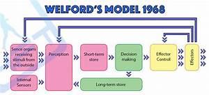 Sports Psychology  Welfords Model 1968