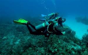 Fisheries and Aquatic Sciences Programs | School of Forest ...  Aquatic