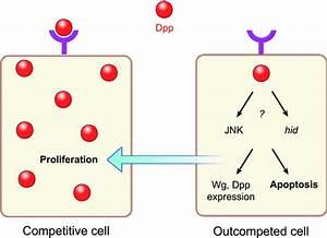 Diagram Cells Simple
