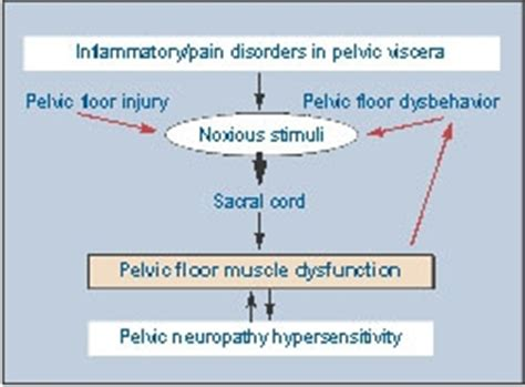 pelvic floor dysfunction a treatment update page 3