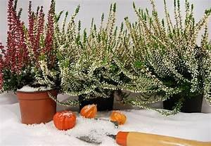 Schattenpflanzen Garten Winterhart : winterharte k belpflanzen obi ratgeber ~ Sanjose-hotels-ca.com Haus und Dekorationen
