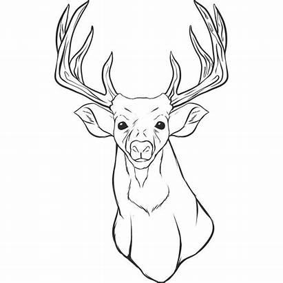 Deer Coloring Pages Head Printable