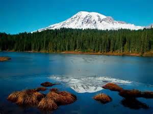 Forest Mountain River Landscape