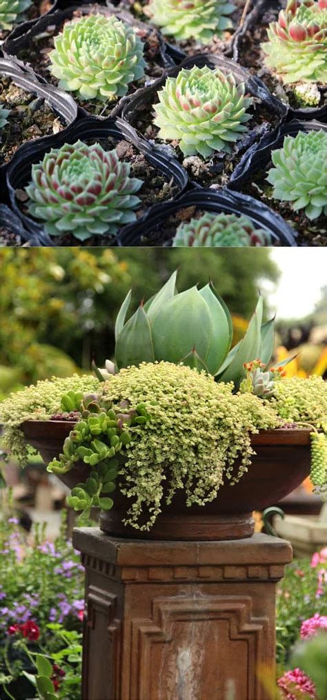 Garden Beautiful Succulents by How To Plant Beautiful Succulent Gardens In 5 Easy Steps