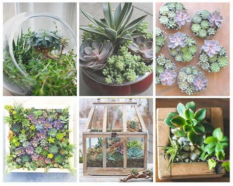 mini plante grasse 5 plantes grasses 224 d 233 couvrir crassula sedum haworthia